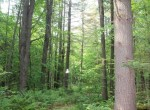 Wooded land for sale near Adirondacks