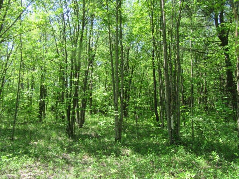 2.5 acres Wooded Building Lot for Sale, Whitestown, NY!