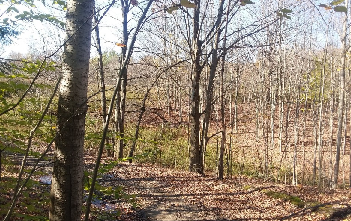 hunting land property that is a Land Deal!