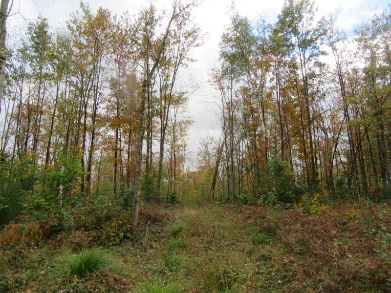 Affordable acreage for sale in NY