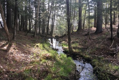114 acres Hunting Land Colton NY
