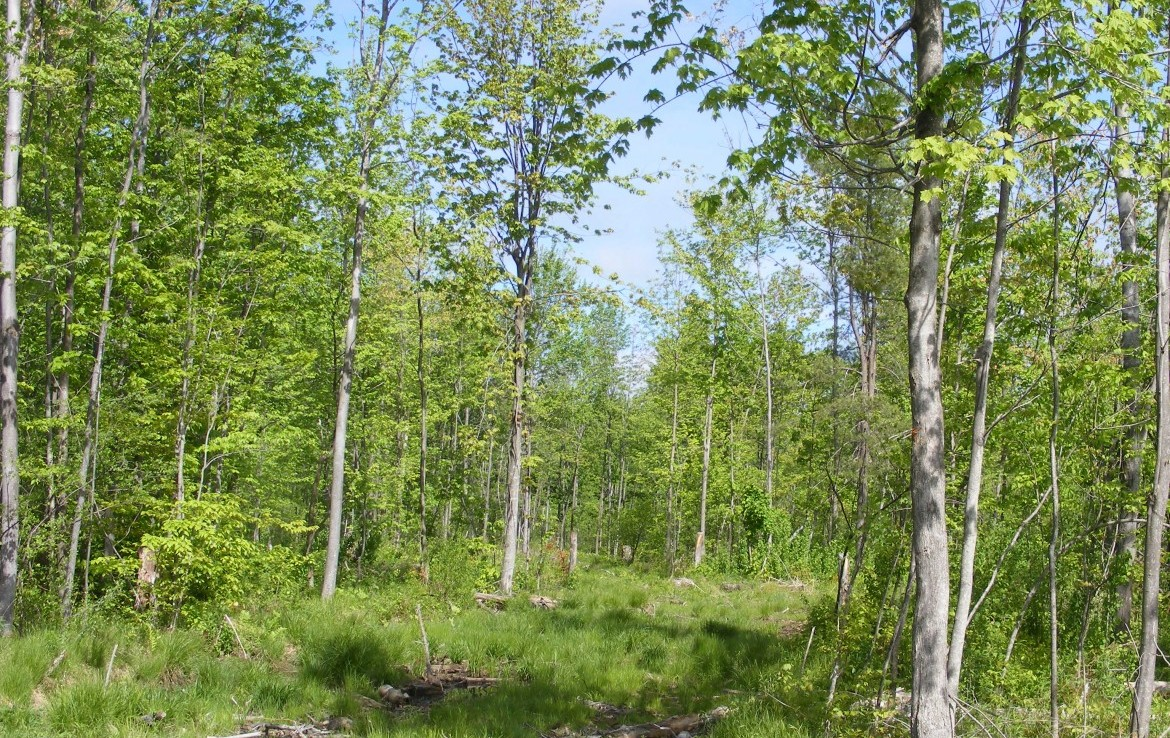 33 acres of land for sale Stockholm NY