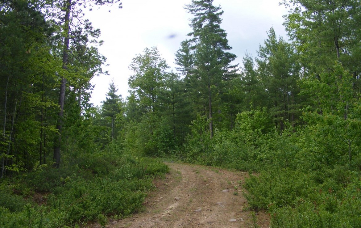 725 acres of beautiful Adirondack Timberland for sale in Ausable, NY!