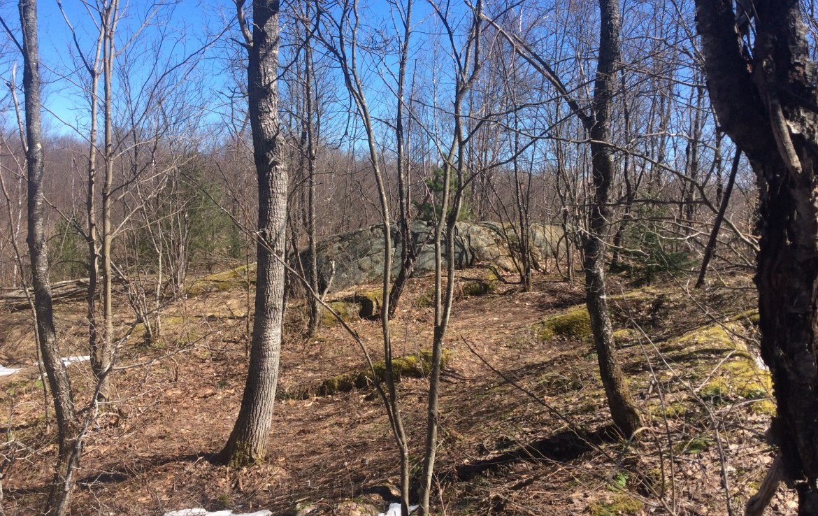 200 acres Hunting Land Bordering State Forest