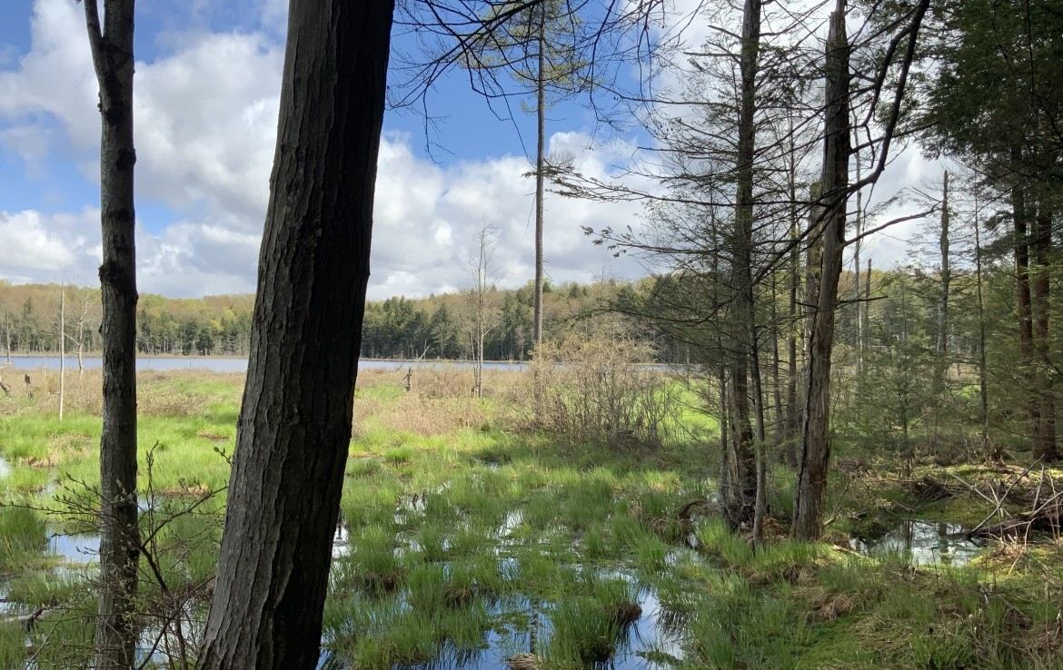 158 acres pristine land for sale and 3 Bedroom Contemporary in Parish, NY!