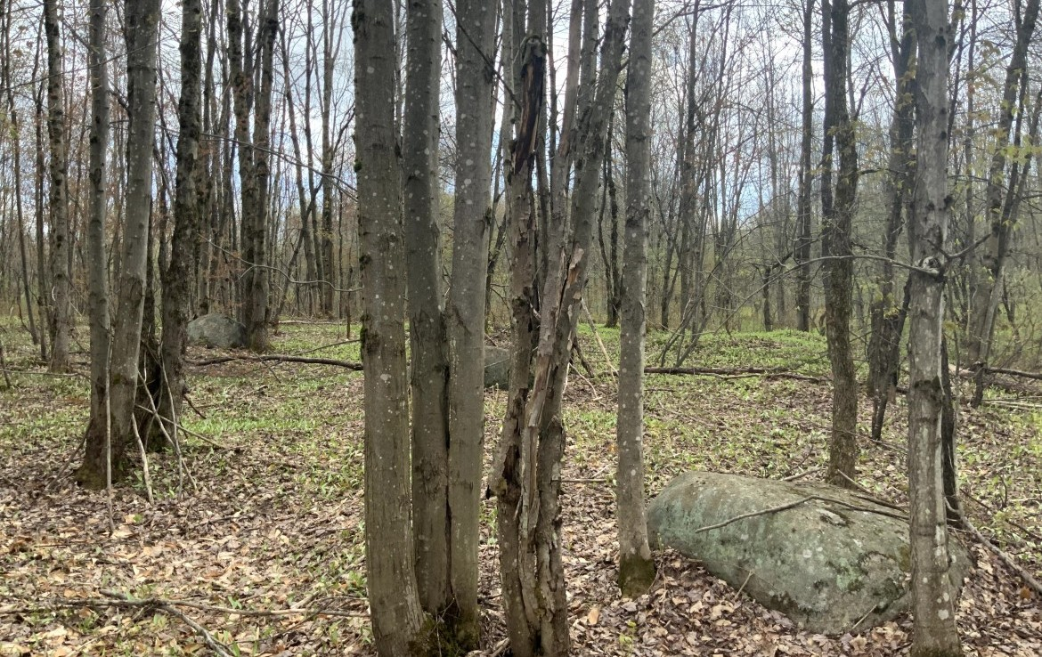 Approved Building Lot that borders State Forest in Steuben, NY!