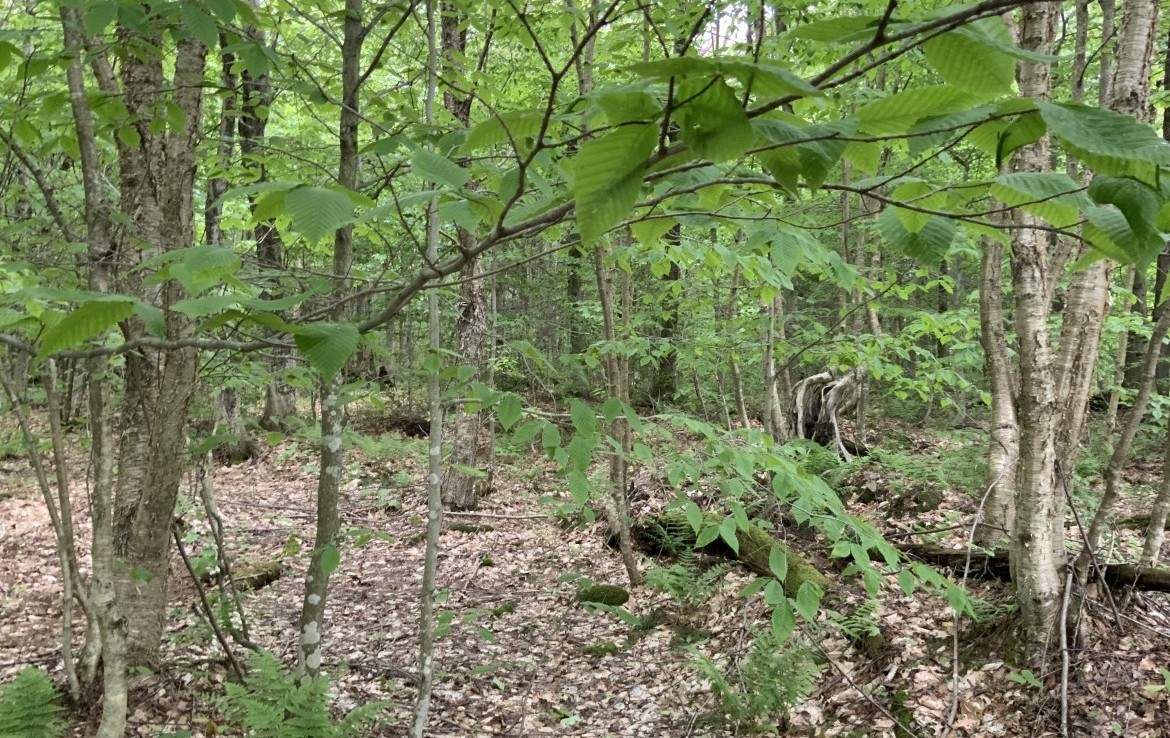 5 acres Bordering State Forest Redfield NY