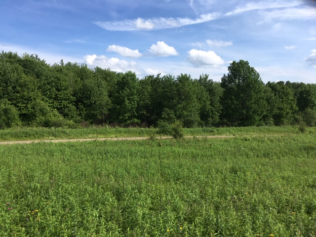 5 acres Camp Site with State Land Access