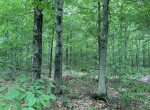 5.14 acres Hunting Land for sale bordering State Forest with electric available in Redfield, NY!