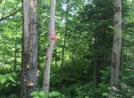 26.72 acres Hunting Land for sale in Malone, NY!