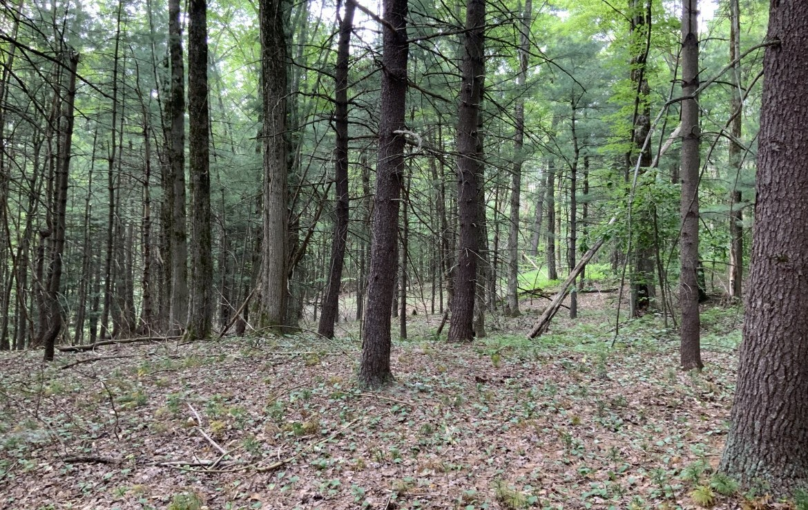 80 acres Northern Zone Hunting and Fishing Land