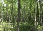 This heavily wooded 13 acre property would make a great place for a Base-camp for all of your weekend adventures.