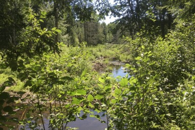160 acres Hunting Land with Creek Russell NY