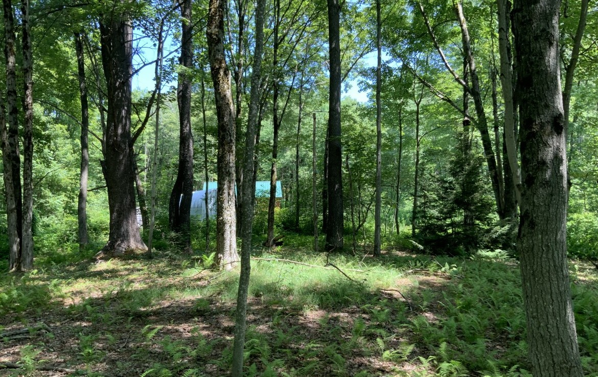 Access to an ocean of State Forest in Florence, NY!