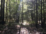 150 acres Timberland and Hunting Land for sale in Madrid, NY!