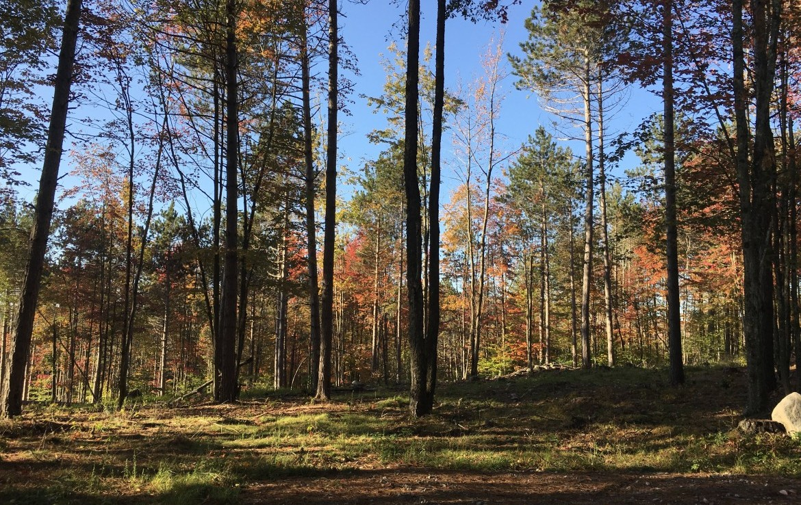 This amazing 10 acre lot offers a secluded cabin site