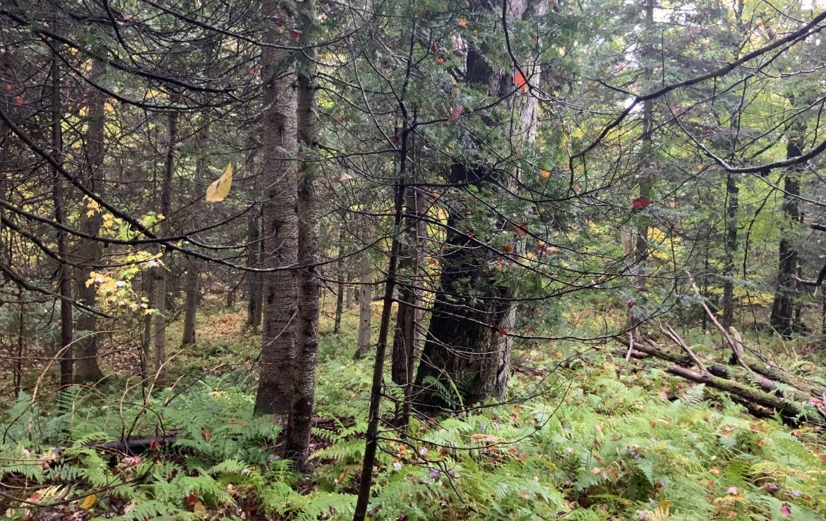 Fish, hunt, snowmobile and ride ATV's throughout the Lewis County Trail System