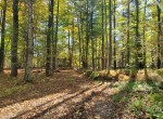 91 acres Country Building Site Addison NY
