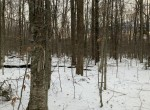 298 acres Hunting Land for sale in Ephratah, NY!