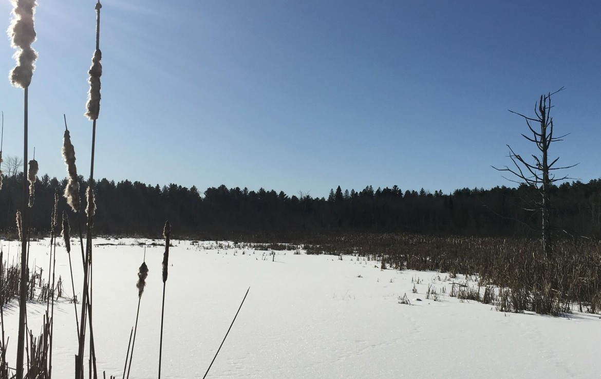 54 acres Hunting and Fishing Land for sale bordering Brasher State Forest!