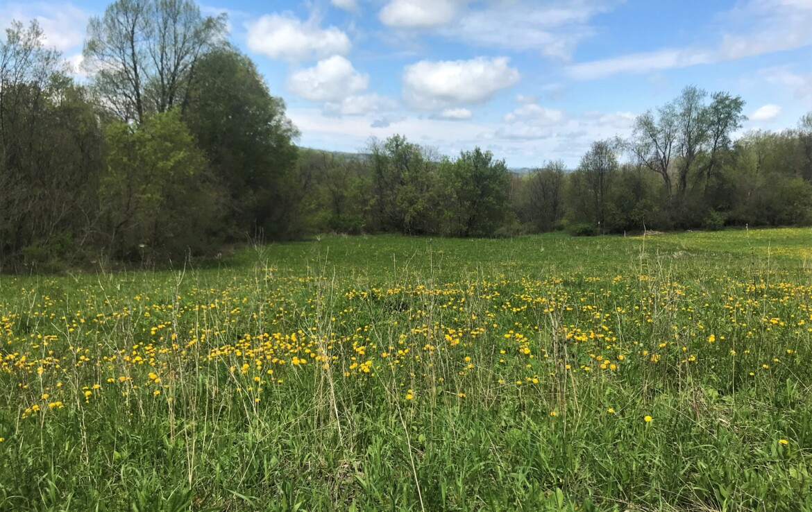 Great Building Lot With Electric, Public Water and Approved Septic Design!
