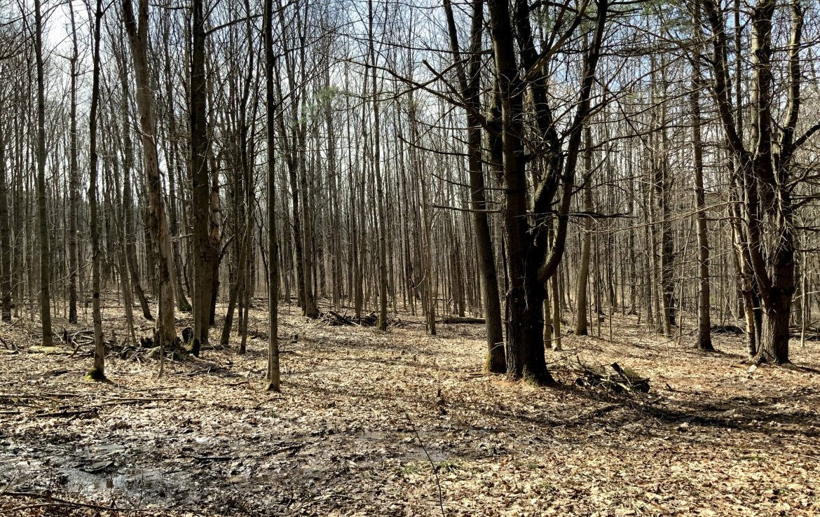 Perfect Southern Tier Hunting Base Camp with Fields and Woodlands!
