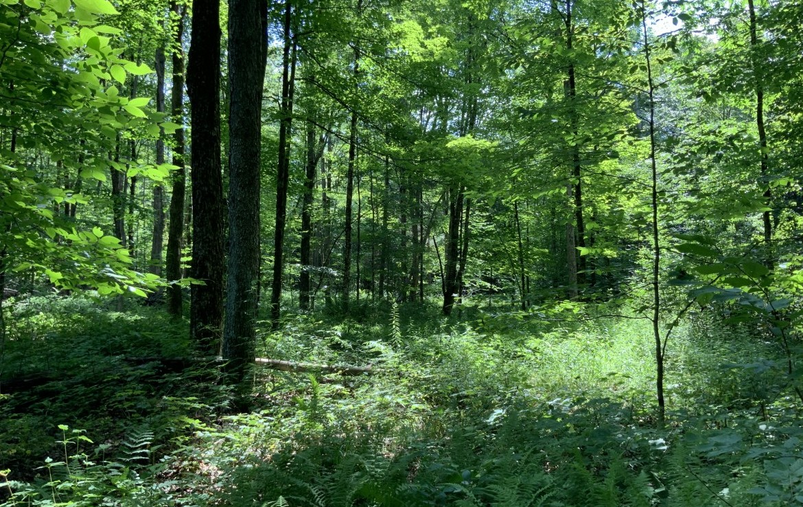 6.32 acres Camp Site with creek in Pharsalia, NY!