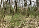 7.36 acres Mature Woodlands in Constantia, NY!