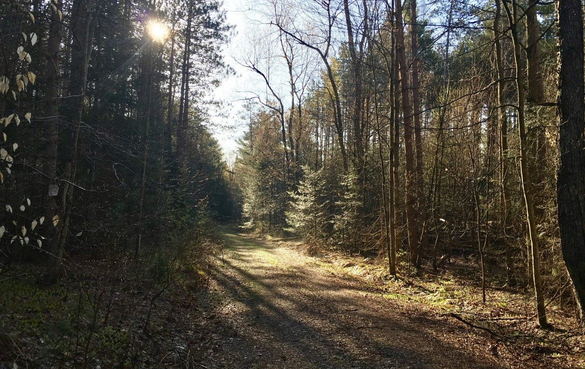 50 acre Land for Sale with Creek Frontage Diana, NY!