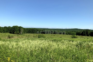 95 acres With Views of Woods and Fields Deerfield NY