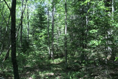 12 Acre Camp Lot Bordering State Land Duane NY