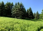 95 acres Land For Sale In The Foothills of Adirondacks, Deerfield NY!