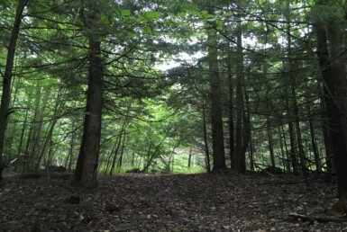 10 Acre Camp Lot With Power Parishville NY