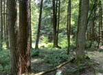 Ultimate Chenango County Hunting Property Bordering Five Streams State Forest!