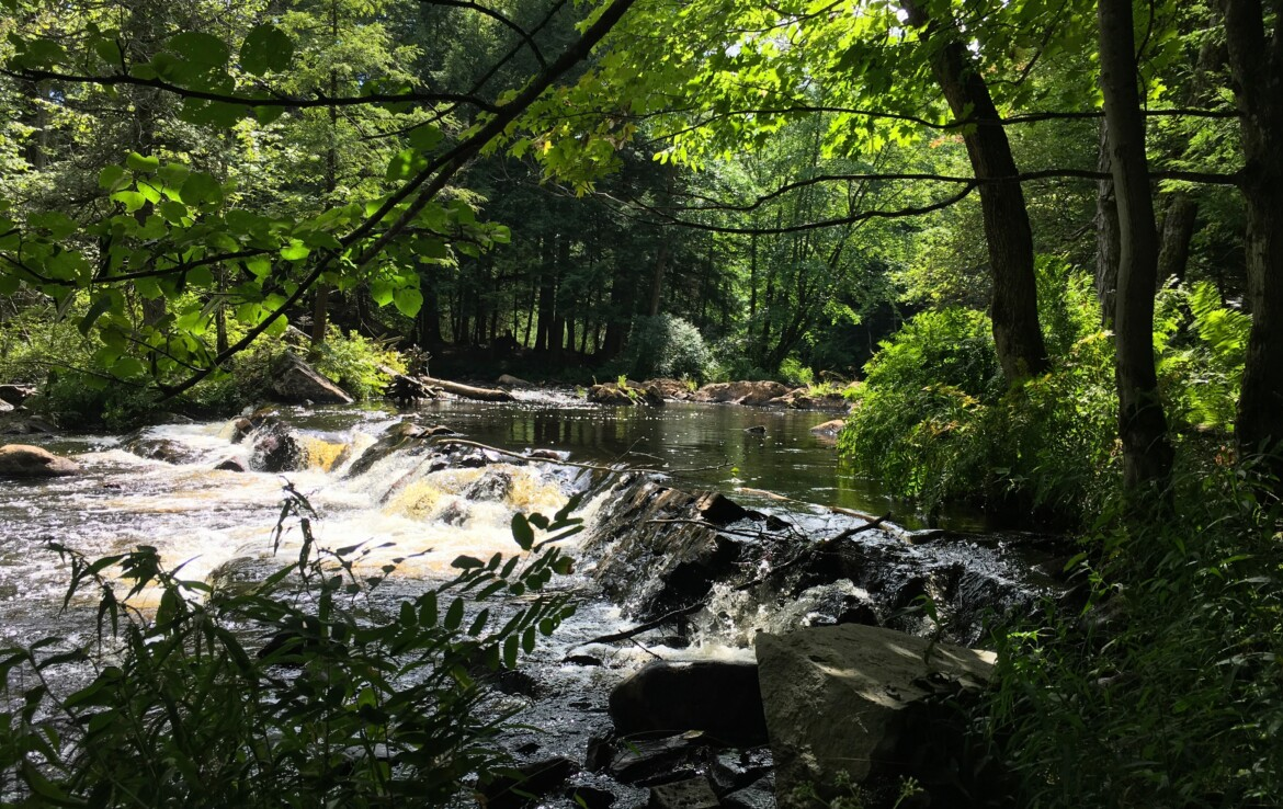Amazing Fishing On This Private Wooded Building Lot With Electricity!