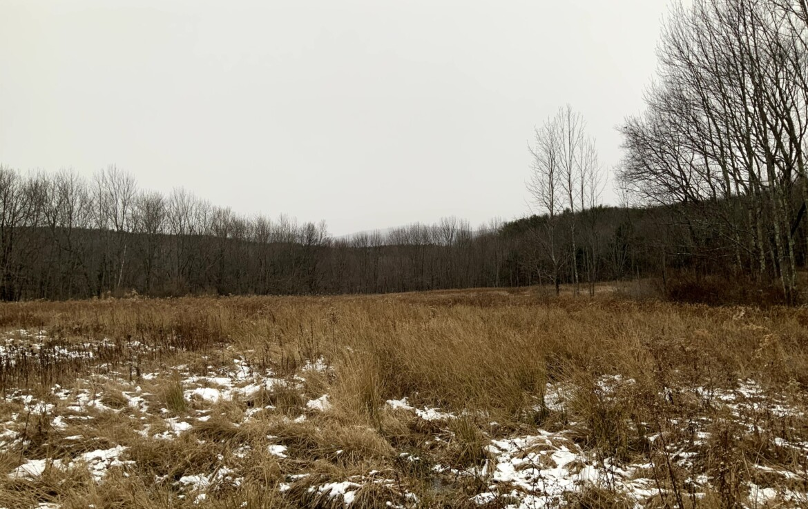 Ideal Country Home/Cabin Site with Public Utilities at Road!