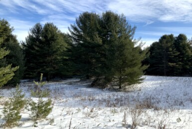 5 acres Hunting Camp Lot Near State Land Amboy NY
