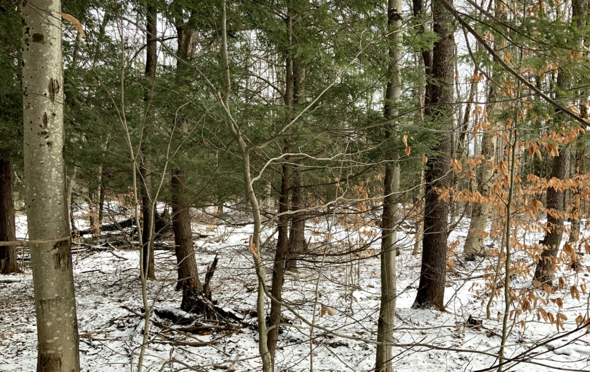 5 acres Wooded Land for Sale with Electric Available on the Town Road!