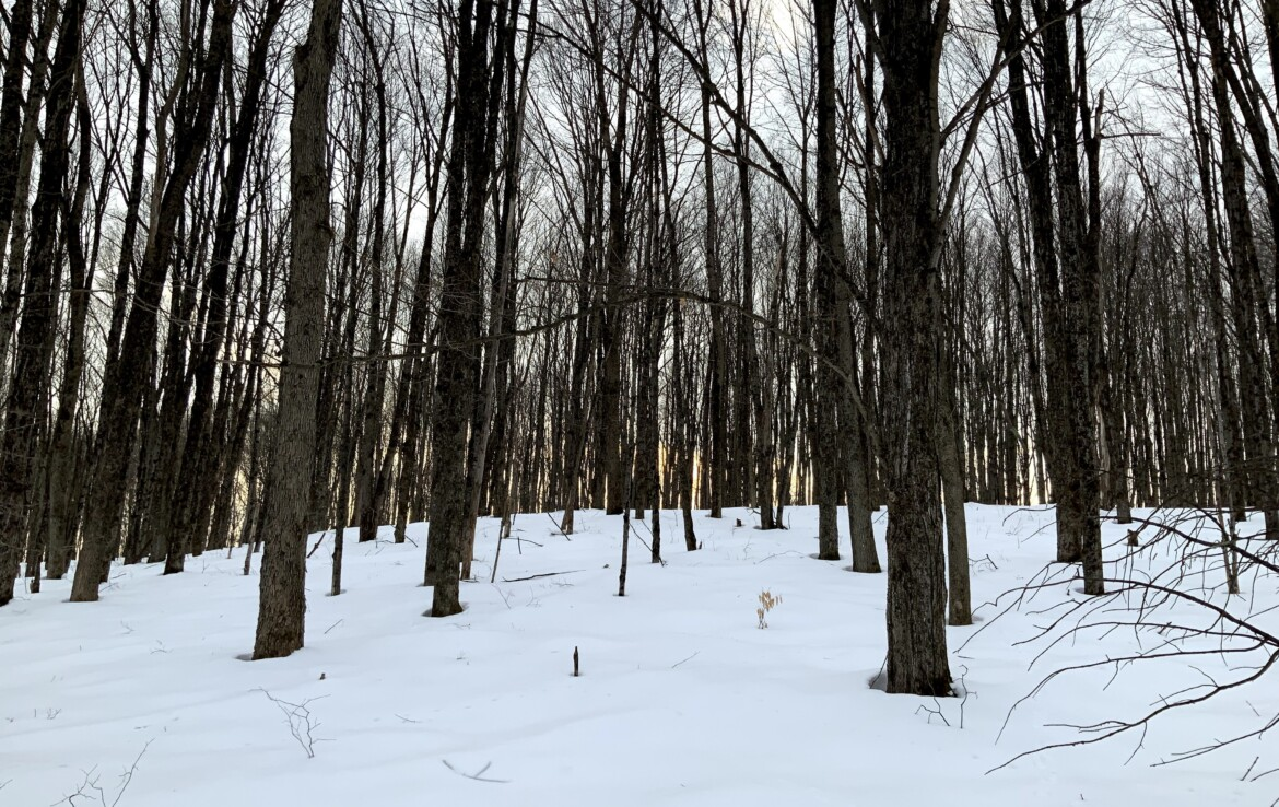 10 acre Hunting Land for Sale with Unfinished Cabin, Brookfield NY!