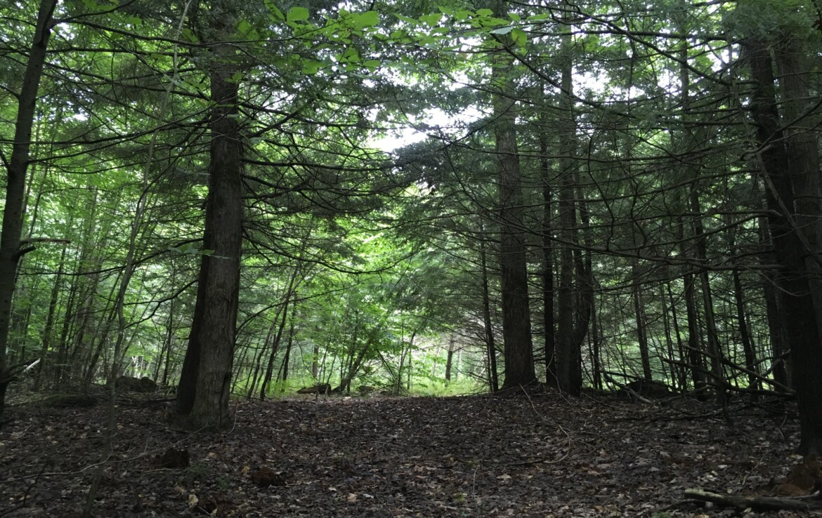 10.8 Acre Private Wooded Land for Sale in Parishville NY!
