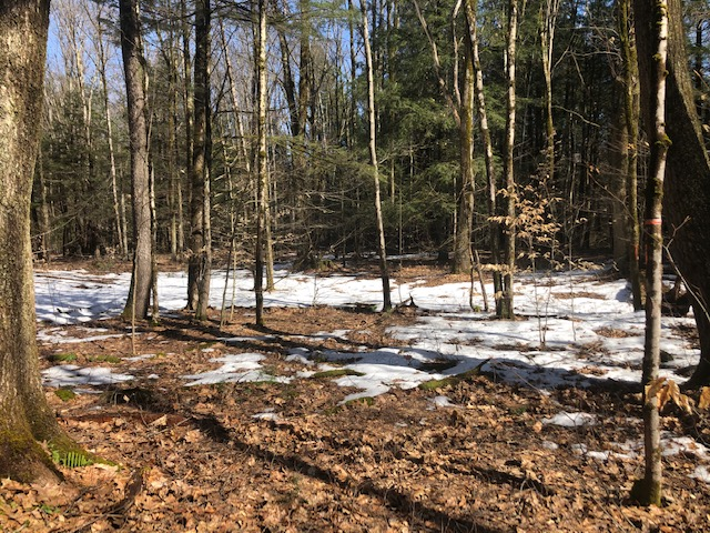 Perfect Secluded Wooded Cabin Site on Private Road!