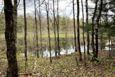 10.7 acres Along the Little River Amboy NY