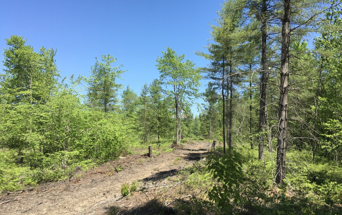 19 Acres Hunting Land for Sale in St. Lawrence County, Brasher, NY!
