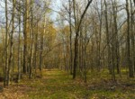 Forest Wilderness Retreat with Pond, Trails, Power and Internet!