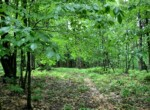 15 acres Hunting Land for Sale Bordering Conservation Easement Lewis, NY!