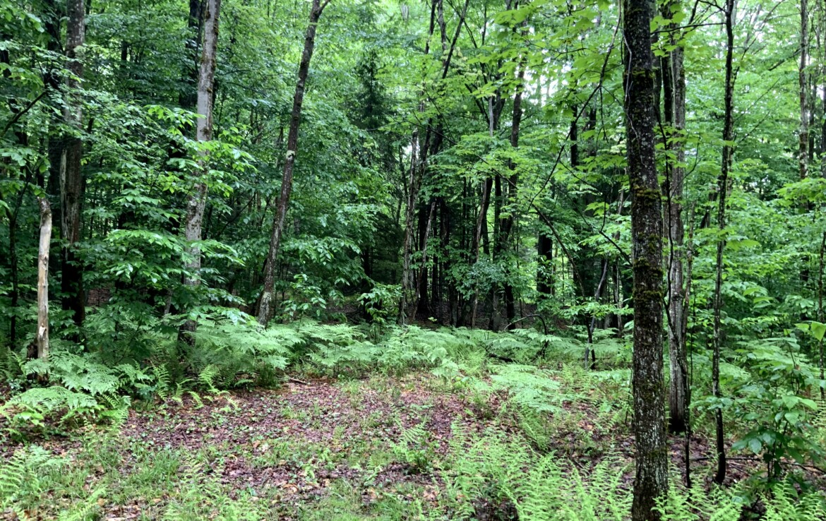 Ideal Tug Hill Recreation Property for Hunting, Fishing, and Snowmobiling!