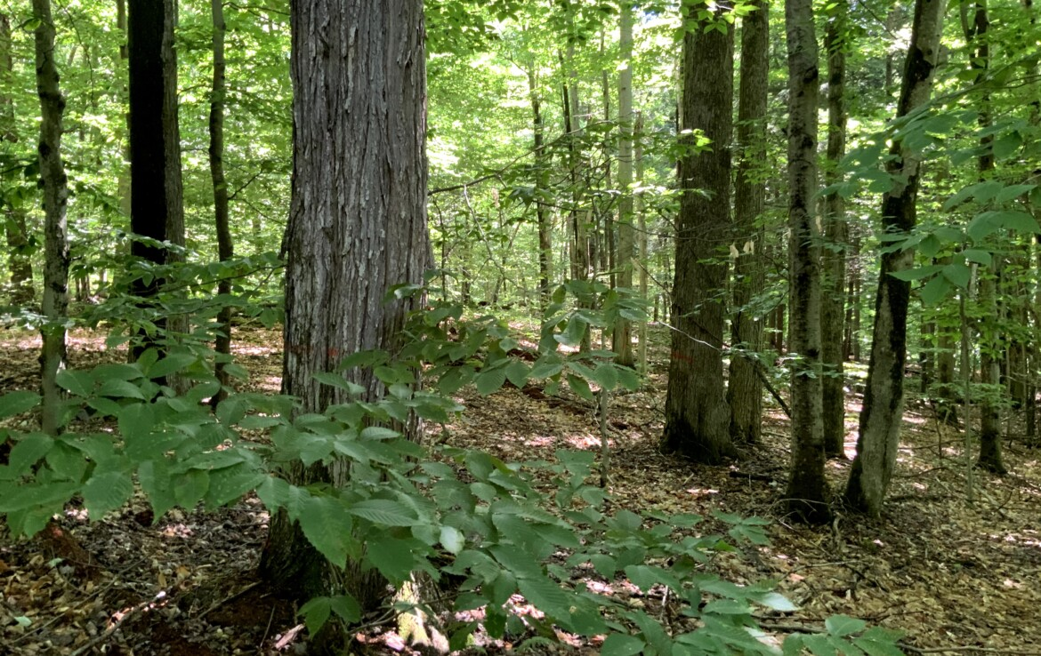 Secluded Timberland Near Oneida Lake with Stream on Year-Round Road!