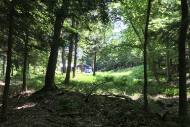 134 Acre Hunting Land and Off-Grid Cabin Edwards NY