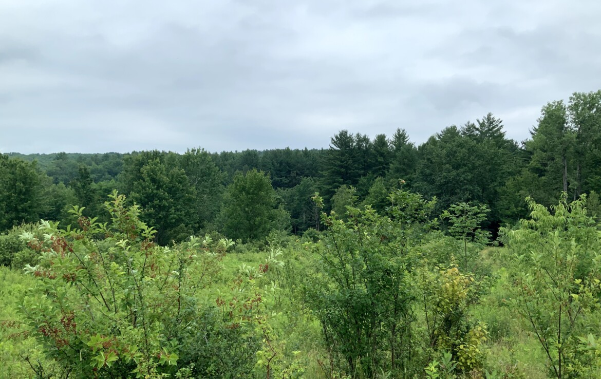 5 acres Land for Sale Overlooking Mad River State Forest, Florence, NY!